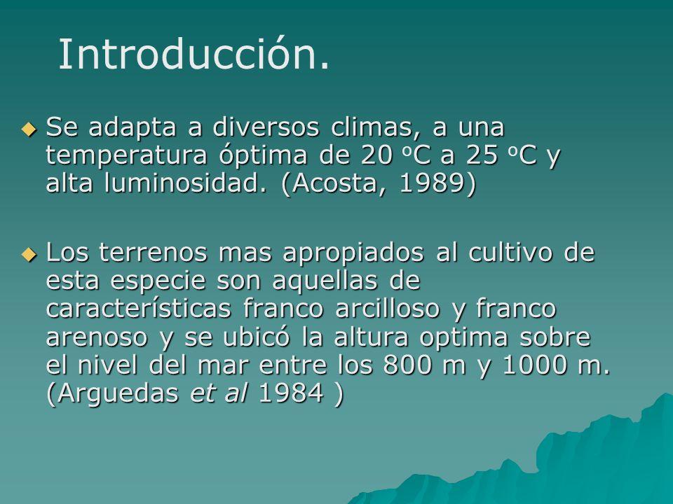 Se adapta a diversos climas, a una temperatura óptima de 20 C a 25 C y alta luminosidad. (Acosta, 1989) Se adapta a diversos climas, a una temperatura