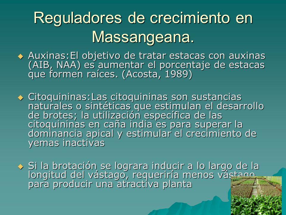 Reguladores de crecimiento en Massangeana. Auxinas:El objetivo de tratar estacas con auxinas (AIB, NAA) es aumentar el porcentaje de estacas que forme