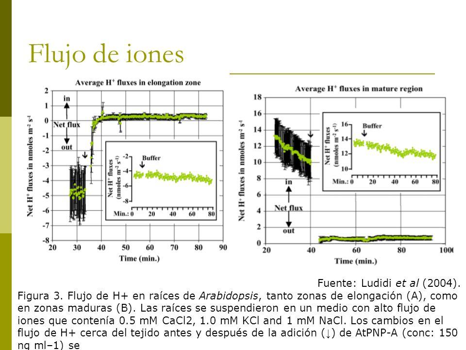 Flujo de iones Fuente: Ludidi et al (2004). Figura 3. Flujo de H+ en raíces de Arabidopsis, tanto zonas de elongación (A), como en zonas maduras (B).