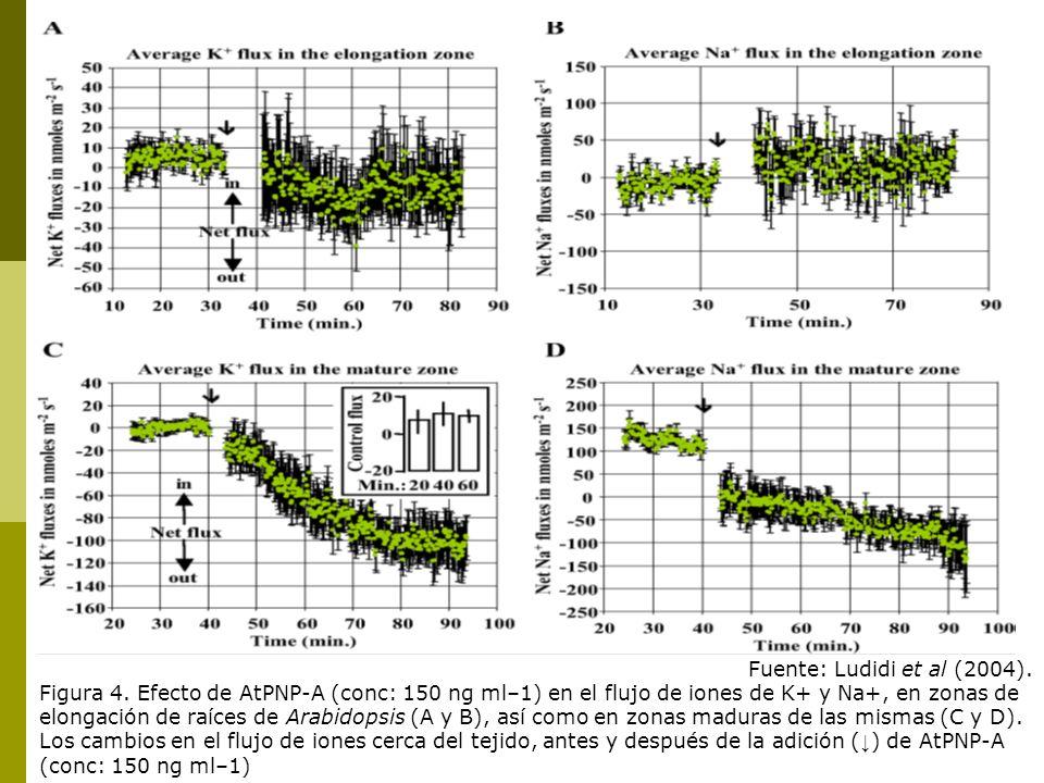 Fuente: Ludidi et al (2004). Figura 4. Efecto de AtPNP-A (conc: 150 ng ml–1) en el flujo de iones de K+ y Na+, en zonas de elongación de raíces de Ara