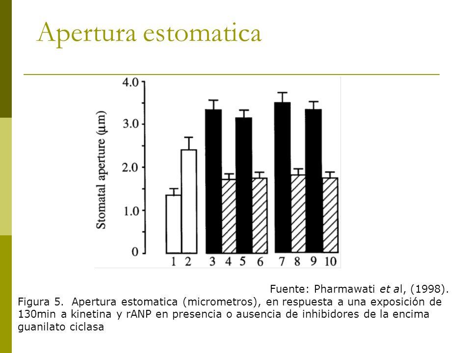 Apertura estomatica Fuente: Pharmawati et al, (1998). Figura 5. Apertura estomatica (micrometros), en respuesta a una exposición de 130min a kinetina