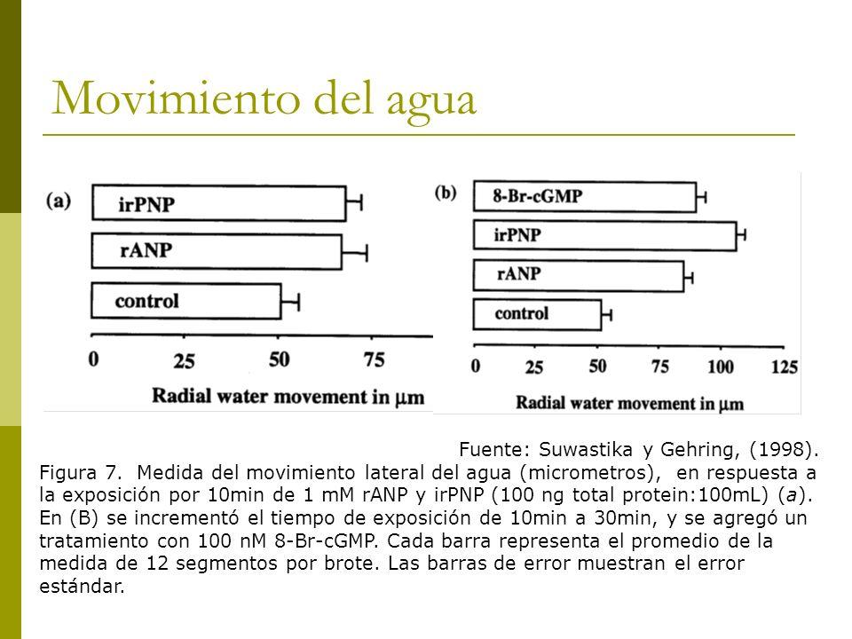 Movimiento del agua Fuente: Suwastika y Gehring, (1998). Figura 7. Medida del movimiento lateral del agua (micrometros), en respuesta a la exposición