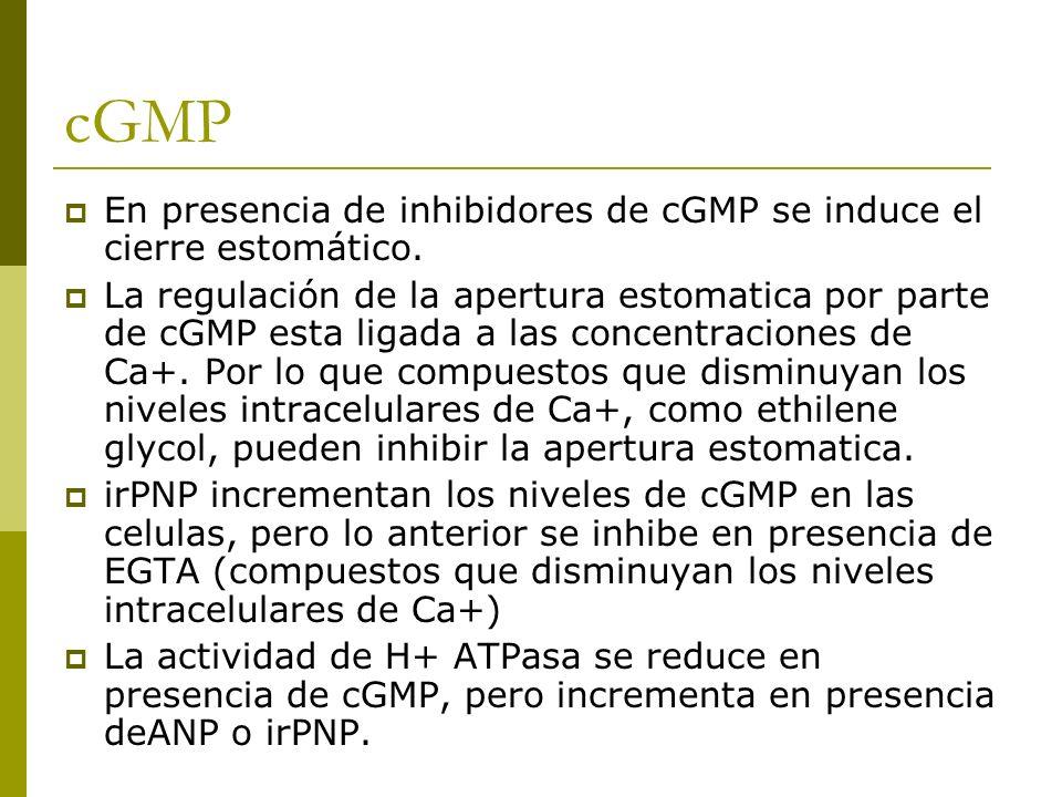 cGMP En presencia de inhibidores de cGMP se induce el cierre estomático. La regulación de la apertura estomatica por parte de cGMP esta ligada a las c