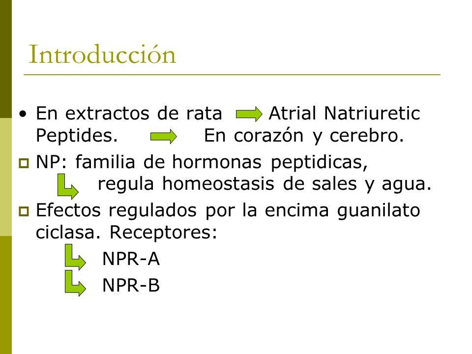 Introducción En extractos de rata Atrial Natriuretic Peptides. En corazón y cerebro. NP: familia de hormonas peptidicas, regula homeostasis de sales y