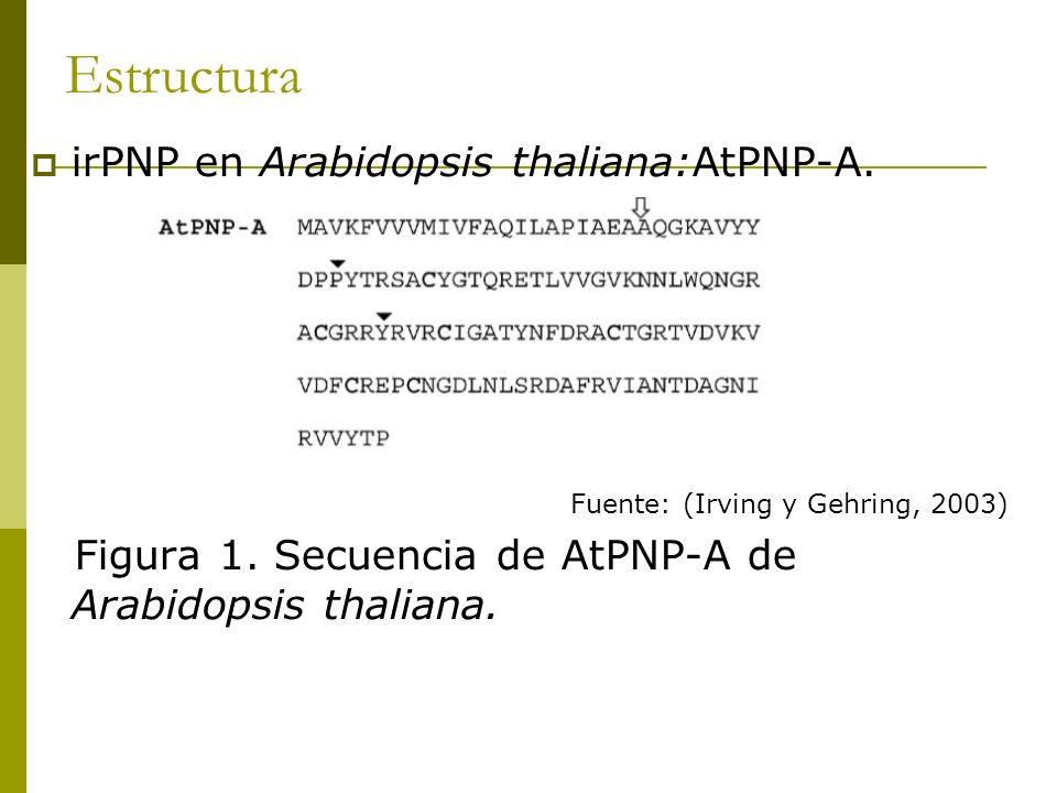 Estructura irPNP en Arabidopsis thaliana:AtPNP-A. Fuente: (Irving y Gehring, 2003) Figura 1. Secuencia de AtPNP-A de Arabidopsis thaliana.