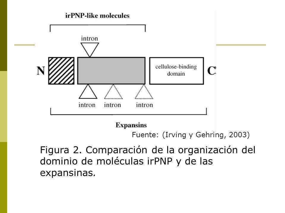 Fuente: (Irving y Gehring, 2003) Figura 2. Comparación de la organización del dominio de moléculas irPNP y de las expansinas.
