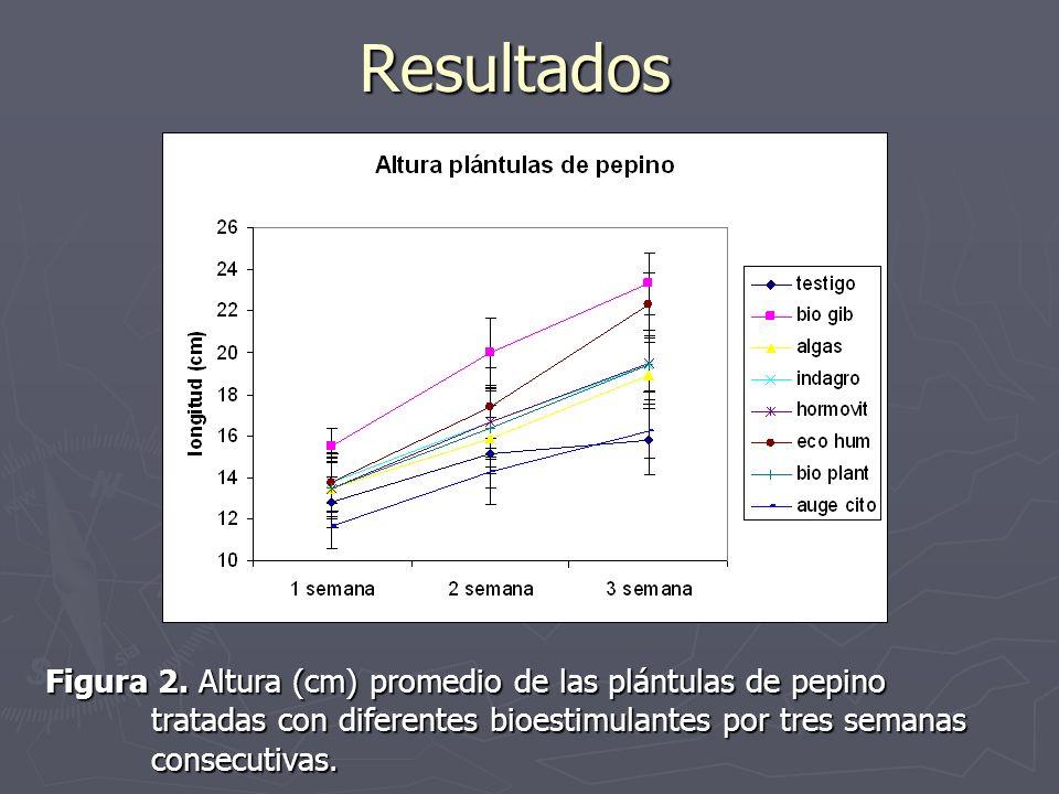 Resultados Figura 2. Altura (cm) promedio de las plántulas de pepino tratadas con diferentes bioestimulantes por tres semanas consecutivas.