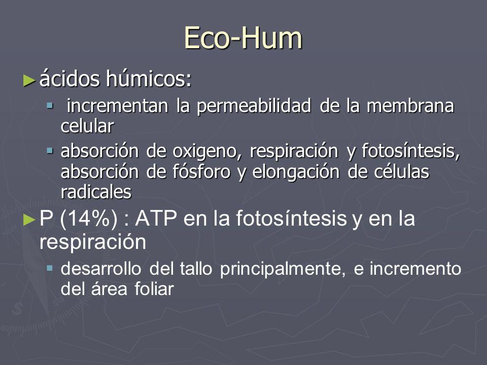 Eco-Hum ácidos húmicos: ácidos húmicos: incrementan la permeabilidad de la membrana celular incrementan la permeabilidad de la membrana celular absorc