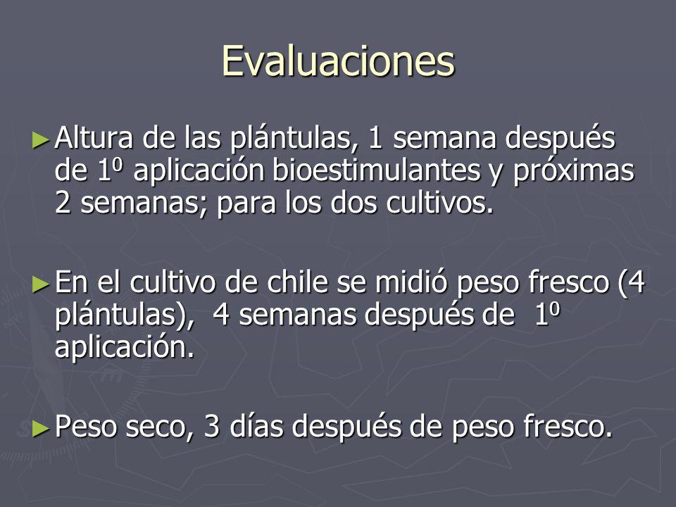 Evaluaciones Altura de las plántulas, 1 semana después de 1 0 aplicación bioestimulantes y próximas 2 semanas; para los dos cultivos. Altura de las pl