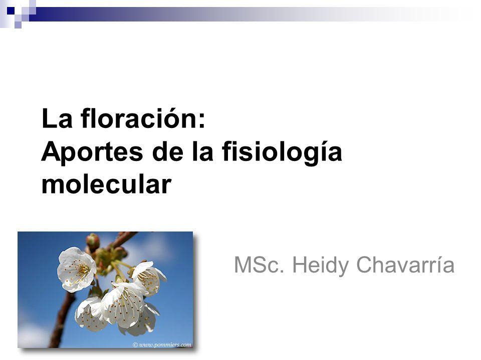 Plan 1) Introducción, ambiente y floración 2) Modelos fisiológicos de la floración 3) Aportes de la fisiología molecular 4)Genes y floración 5) Regulación del fotoperíodo y control de la floración 6) Papel de las hormonas 7) Intereses biotecnológicos
