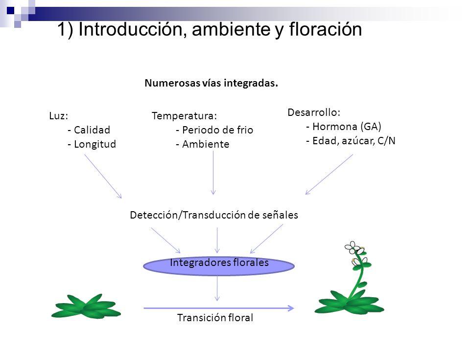 Luz: - Calidad - Longitud Temperatura: - Periodo de frio - Ambiente Desarrollo: - Hormona (GA) - Edad, azúcar, C/N Detección/Transducción de señales I