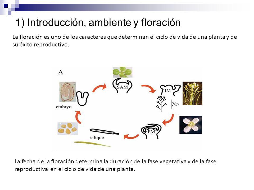 1) Introducción, ambiente y floración La floración es uno de los caracteres que determinan el ciclo de vida de una planta y de su éxito reproductivo.