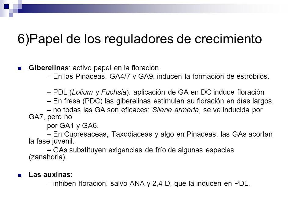 6)Papel de los reguladores de crecimiento Giberelinas: activo papel en la floración. – En las Pináceas, GA4/7 y GA9, inducen la formación de estróbilo