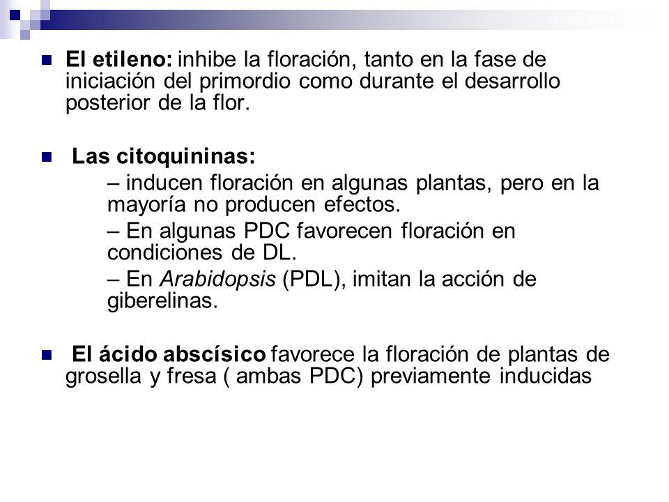 El etileno: inhibe la floración, tanto en la fase de iniciación del primordio como durante el desarrollo posterior de la flor. Las citoquininas: – ind