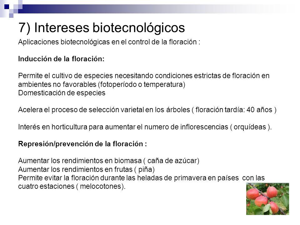 7) Intereses biotecnológicos Aplicaciones biotecnológicas en el control de la floración : Inducción de la floración: Permite el cultivo de especies ne