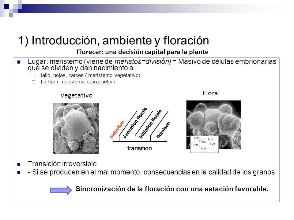1) Introducción, ambiente y floración Lugar: meristemo (viene de meristos=división) = Masivo de células embrionarias que se dividen y dan nacimiento a