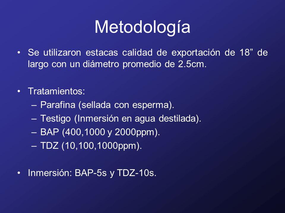 Metodología Con 4 repeticiones de 3 estacas/repetición, total de 12 estacas/tratamiento.