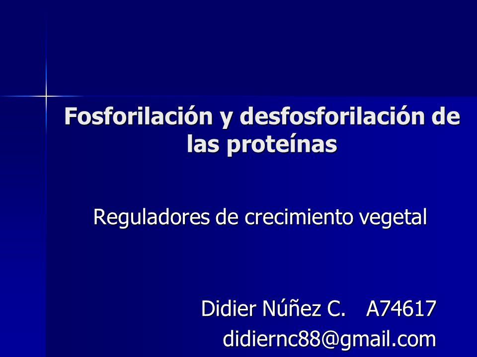 Fosforilación y desfosforilación de las proteínas Reguladores de crecimiento vegetal Didier Núñez C. A74617 didiernc88@gmail.com