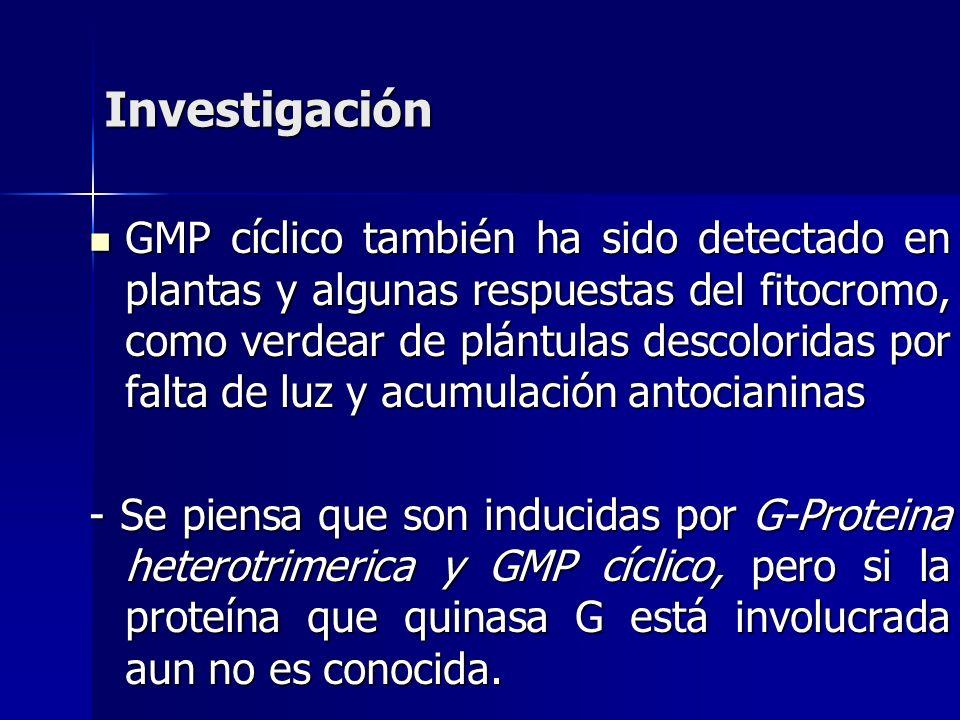 GMP cíclico también ha sido detectado en plantas y algunas respuestas del fitocromo, como verdear de plántulas descoloridas por falta de luz y acumula