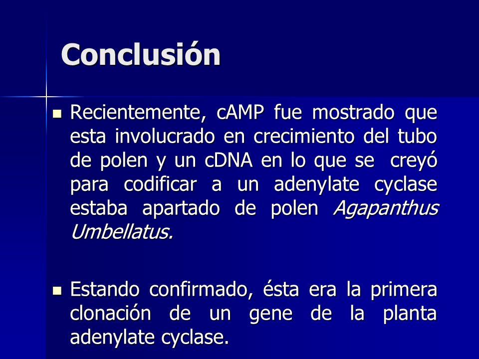 Recientemente, cAMP fue mostrado que esta involucrado en crecimiento del tubo de polen y un cDNA en lo que se creyó para codificar a un adenylate cycl