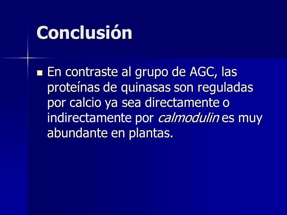 En contraste al grupo de AGC, las proteínas de quinasas son reguladas por calcio ya sea directamente o calmodulin es muy abundante en plantas. En cont