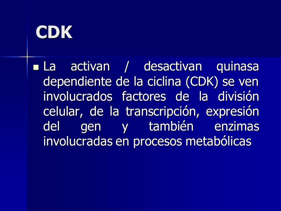 CDK La activan / desactivan quinasa dependiente de la ciclina (CDK) se ven involucrados factores de la división celular, de la transcripción, expresió