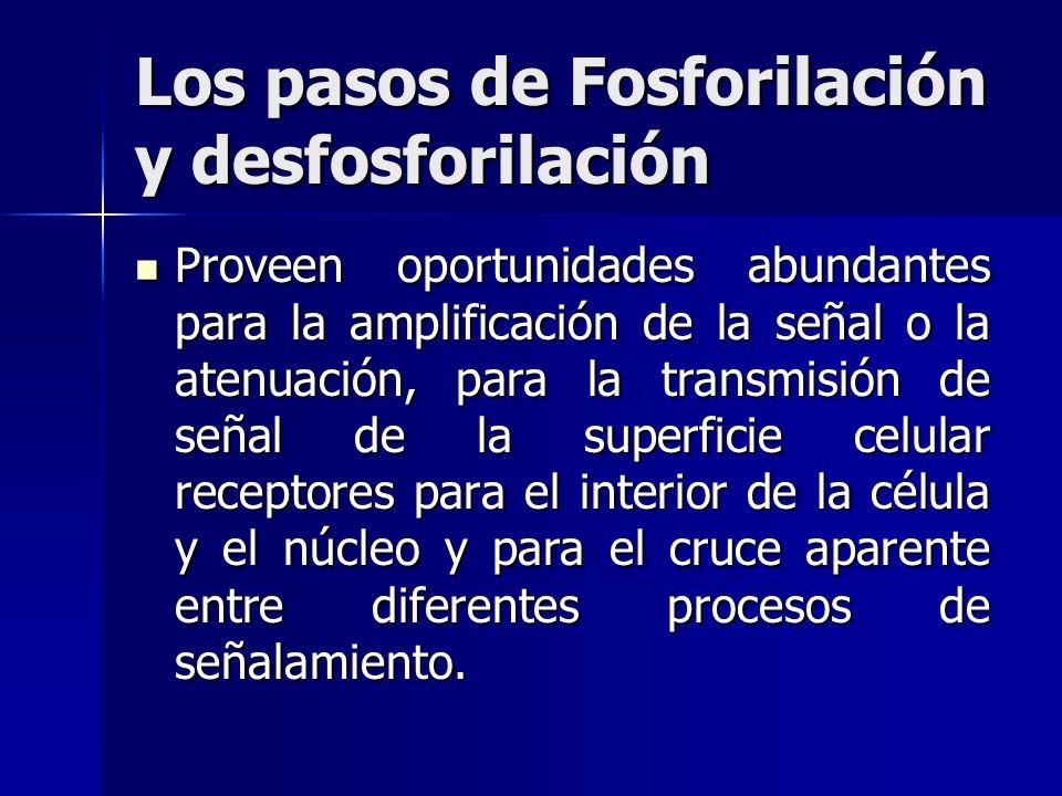 Los pasos de Fosforilación y desfosforilación Proveen oportunidades abundantes para la amplificación de la señal o la atenuación, para la transmisión