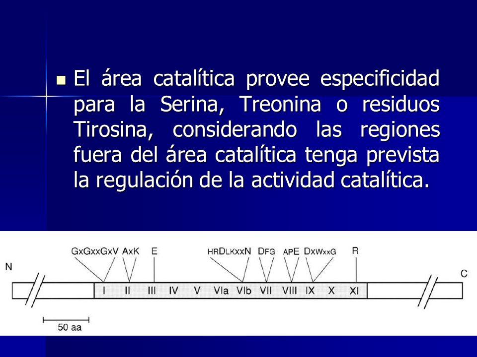El área catalítica provee especificidad para la Serina, Treonina o residuos Tirosina, considerando las regiones fuera del área catalítica tenga previs