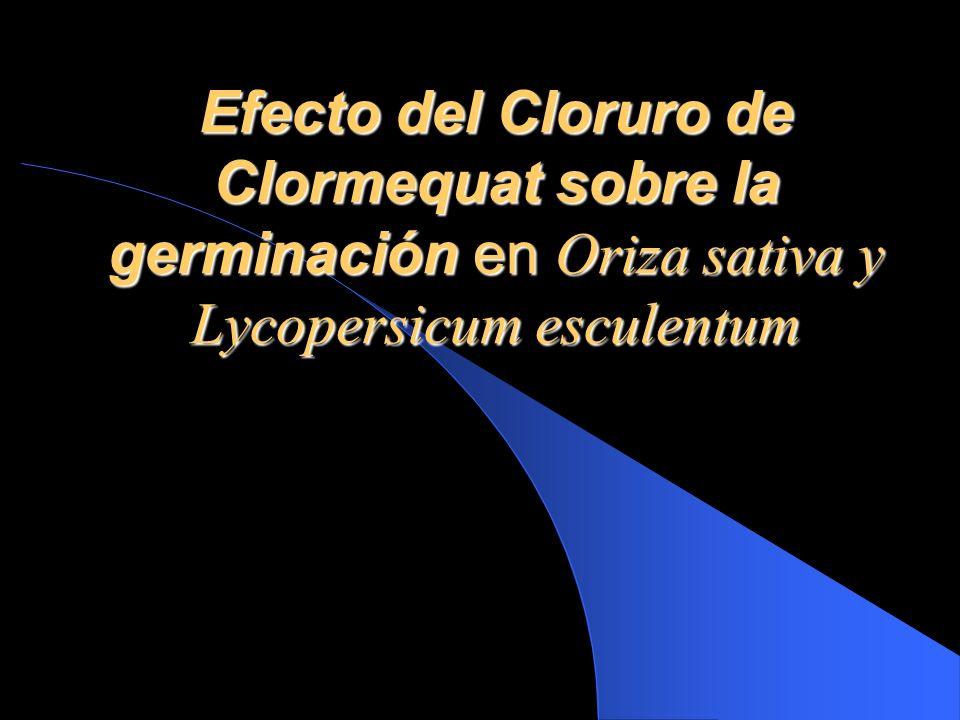 Objetivo General Probar como afecta el Cloruro de Clormequat el porcentaje de germinación en arroz y tomate.