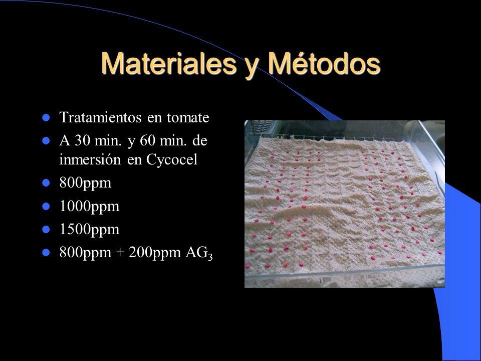 Materiales y Métodos Tratamientos en tomate A 30 min. y 60 min. de inmersión en Cycocel 800ppm 1000ppm 1500ppm 800ppm + 200ppm AG 3