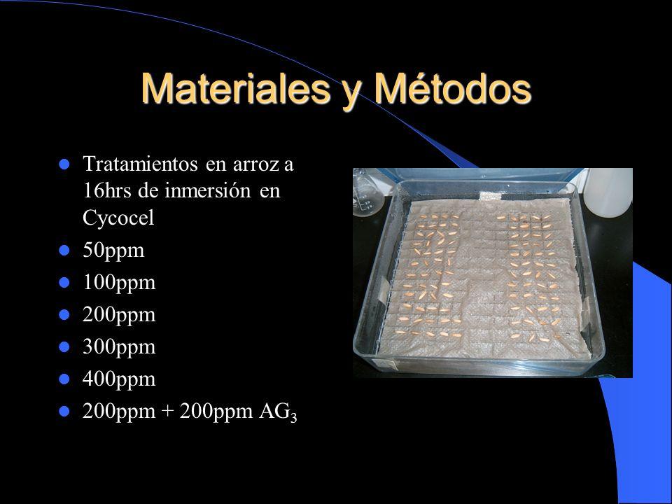 Materiales y Métodos Tratamientos en arroz a 16hrs de inmersión en Cycocel 50ppm 100ppm 200ppm 300ppm 400ppm 200ppm + 200ppm AG 3