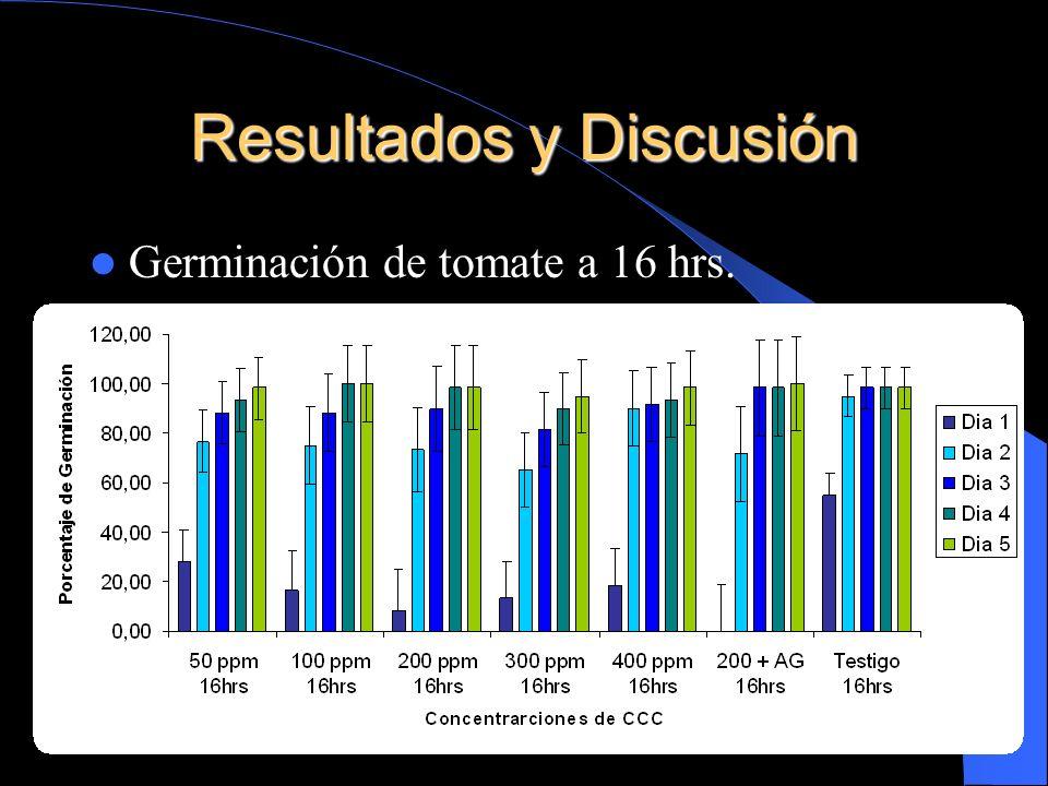 Resultados y Discusión Germinación de tomate a 16 hrs.