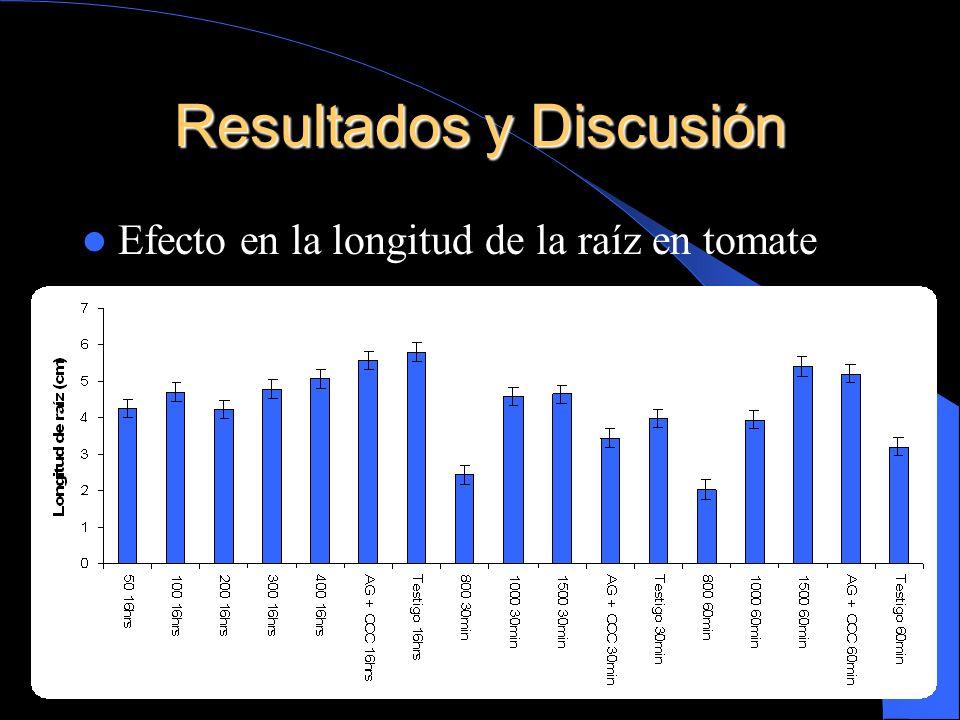 Resultados y Discusión Efecto en la longitud de la raíz en tomate