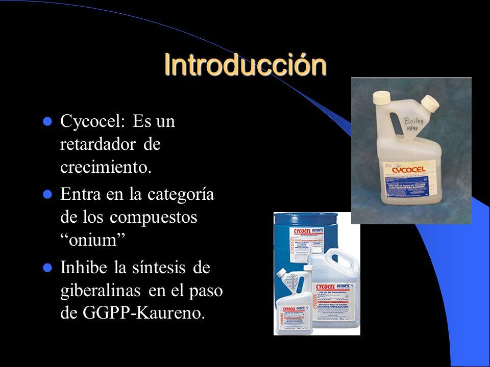Introducción Cycocel: Es un retardador de crecimiento. Entra en la categoría de los compuestos onium Inhibe la síntesis de giberalinas en el paso de G