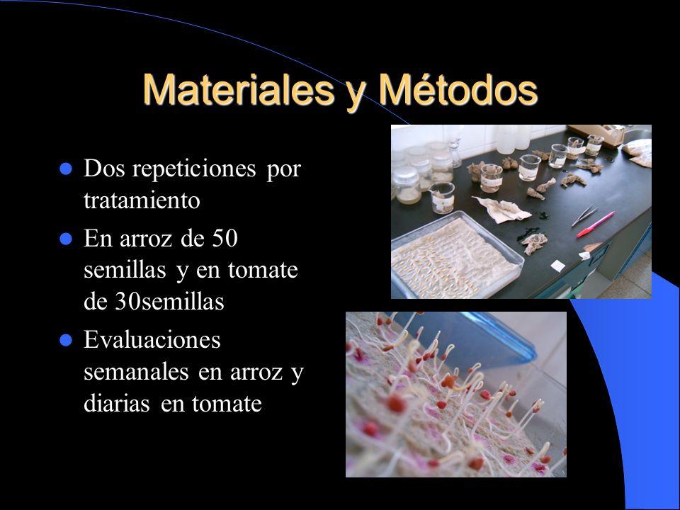 Materiales y Métodos Dos repeticiones por tratamiento En arroz de 50 semillas y en tomate de 30semillas Evaluaciones semanales en arroz y diarias en t