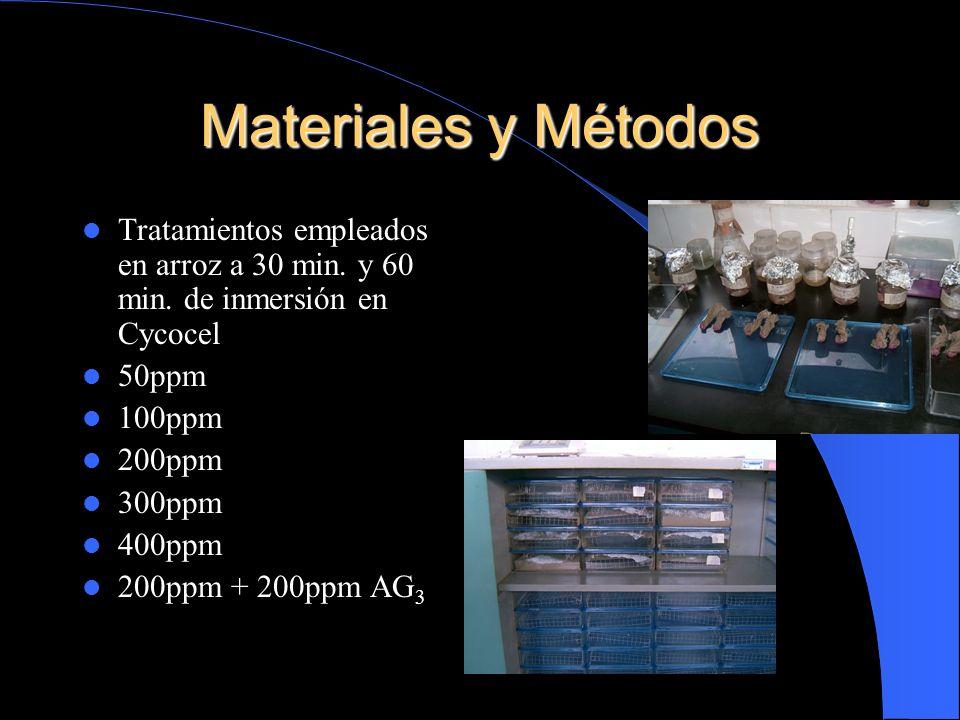 Materiales y Métodos Tratamientos empleados en arroz a 30 min. y 60 min. de inmersión en Cycocel 50ppm 100ppm 200ppm 300ppm 400ppm 200ppm + 200ppm AG