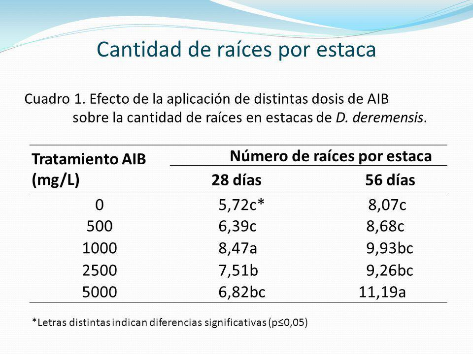 Tratamiento AIB (mg/L) Número de raíces por estaca 28 días56 días 05,72c* 8,07c 5006,39c 8,68c 10008,47a 9,93bc 25007,51b 9,26bc 50006,82bc 11,19a Cua