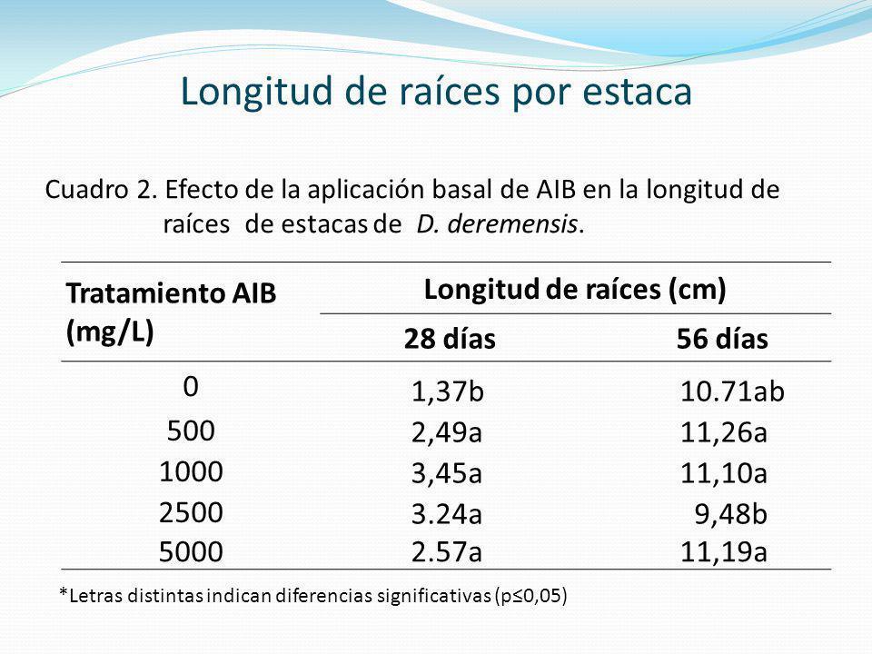 Tratamiento AIB (mg/L) Longitud de raíces (cm) 28 días 56 días 0 1,37b10.71ab 500 2,49a11,26a 1000 3,45a11,10a 2500 3.24a 9,48b 5000 2.57a11,19a Cuadr