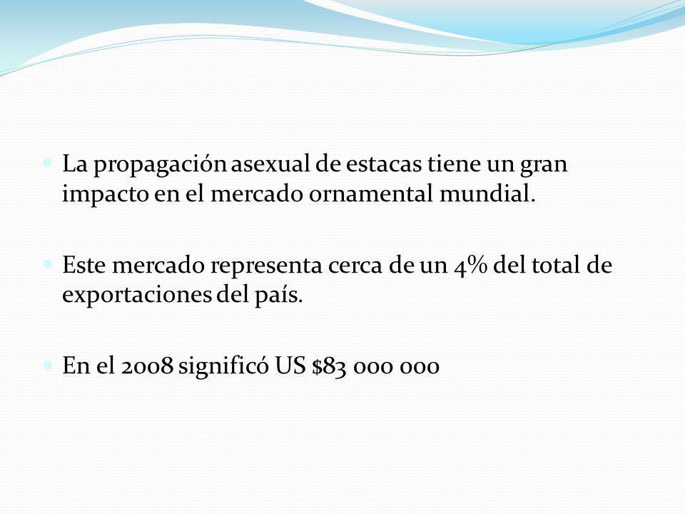 La propagación asexual de estacas tiene un gran impacto en el mercado ornamental mundial. Este mercado representa cerca de un 4% del total de exportac