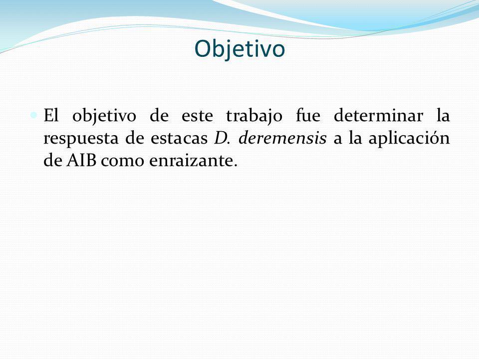 El objetivo de este trabajo fue determinar la respuesta de estacas D. deremensis a la aplicación de AIB como enraizante. Objetivo