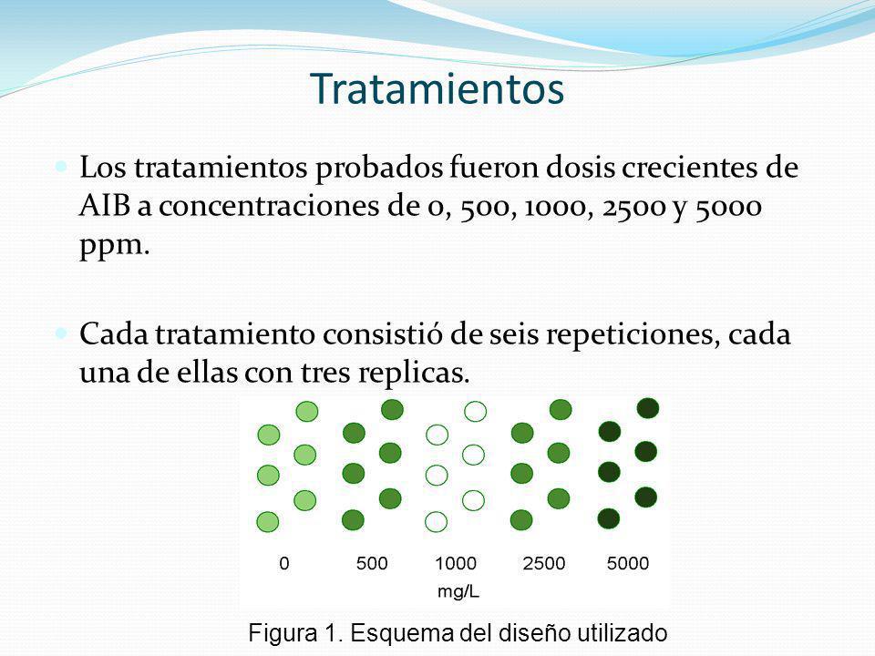 Los tratamientos probados fueron dosis crecientes de AIB a concentraciones de 0, 500, 1000, 2500 y 5000 ppm. Cada tratamiento consistió de seis repeti