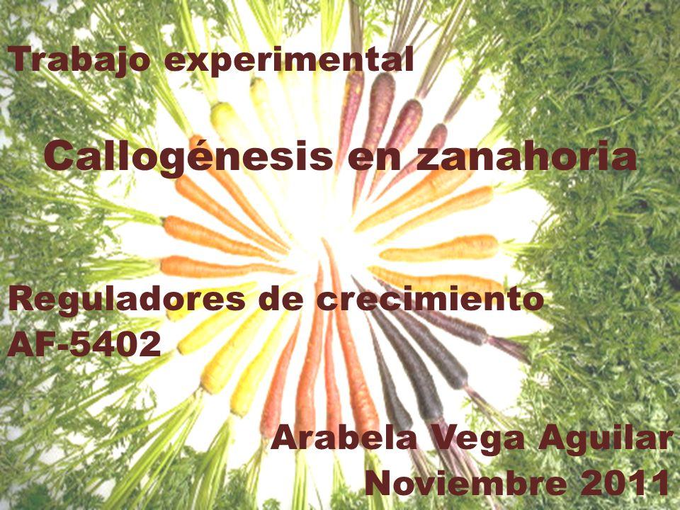 Trabajo experimental Callogénesis en zanahoria Reguladores de crecimiento AF-5402 Arabela Vega Aguilar Noviembre 2011