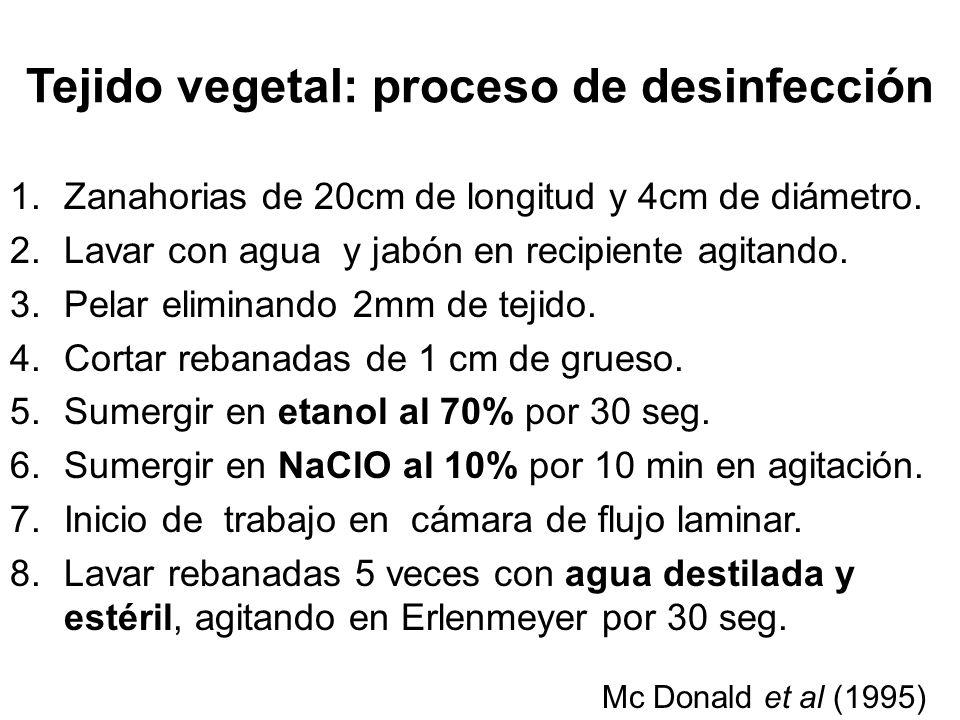 Tejido vegetal: proceso de desinfección 1.Zanahorias de 20cm de longitud y 4cm de diámetro.