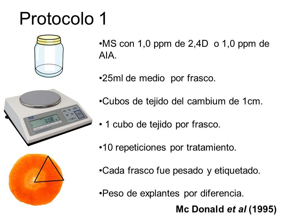 Protocolo 2 MS complementado con: 1ppm de 2,4D, 2ppm de 2,4D, 1ppm de AIA y 2ppm de AIA Capa uniforme y delgada de MS.