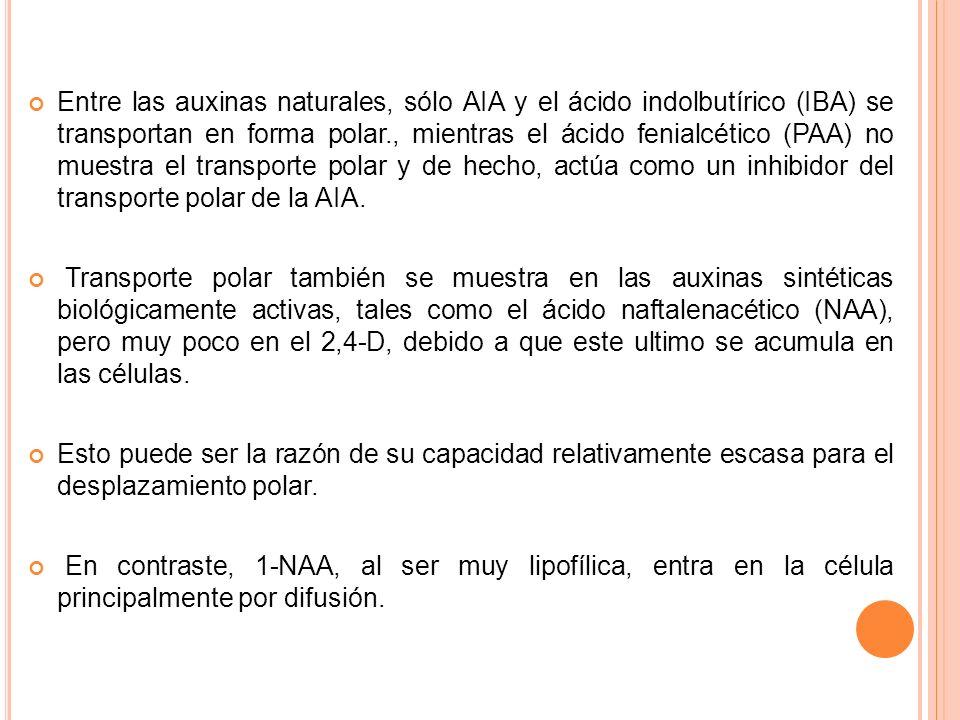 Entre las auxinas naturales, sólo AIA y el ácido indolbutírico (IBA) se transportan en forma polar., mientras el ácido fenialcético (PAA) no muestra e