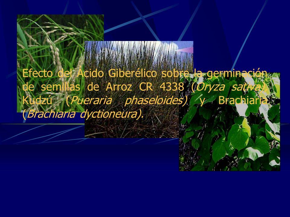 Introducción Giberelinas GERMINACIÓN Durante el proceso se requieren en varios pasos: - La activación del crecimiento vegetativo del embrión.