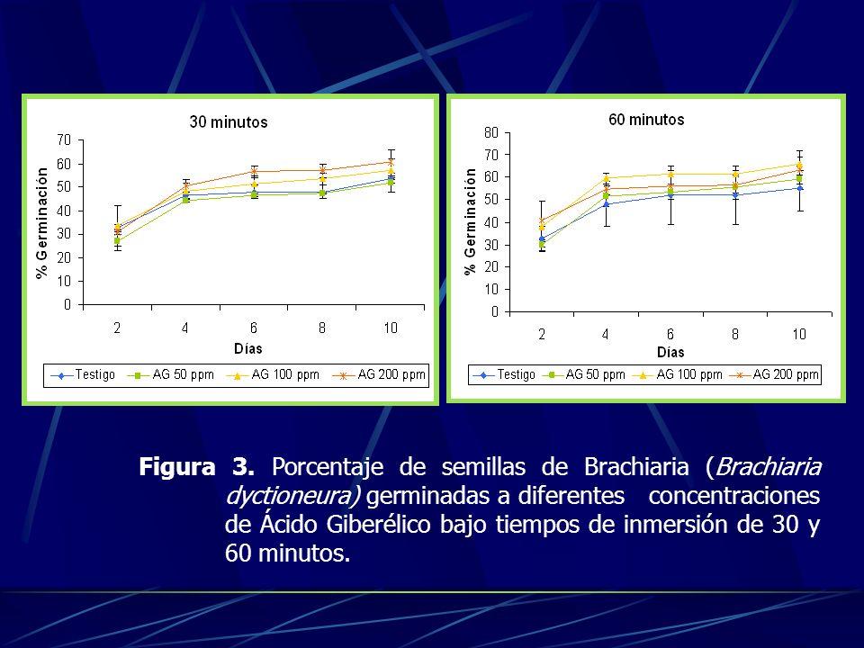 Figura 3. Porcentaje de semillas de Brachiaria (Brachiaria dyctioneura) germinadas a diferentes concentraciones de Ácido Giberélico bajo tiempos de in