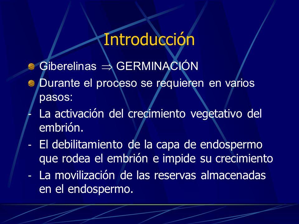 Introducción Dormancia: Fracaso temporal de la viabilidad de las semillas para germinar Se divide en tres etapas: - Pérdida de agua o desecación - Diferenciación de la cubierta seminal - Cese de la transcripción de genes y la síntesis de proteínas - Se han desarrollado métodos mecánicos, físicos y químicos para romperla