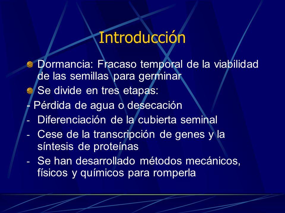 Arroz (Oryza sativa) Gramínea AG 3 promueve germinación y vigor de la plántula= establecimiento y uniformidad.