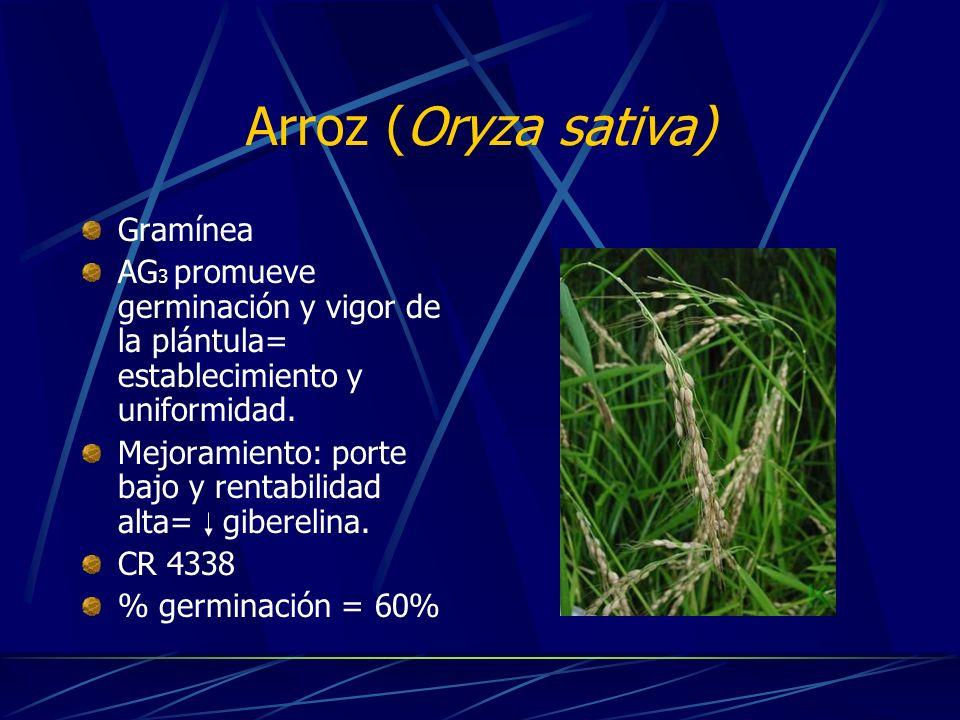 Kudzú (Pueraria phaseloides) Leguminosa forrajera Crecimiento rápido y agresivo Fijador de nitrógeno y aumenta los niveles de P, Mg y Ca Barbechos para aumentar la fertilidad del suelo % germinación= 82%